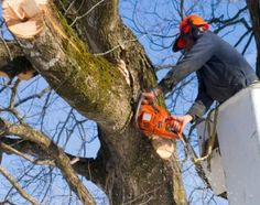 Fort Worth Arborist Co.: The Tree Doctors First things first, what is an arborist and what do they do? An arborist specializes in the care of individual trees and is sometimes known as a tree surgeon or tree doctor.