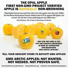GMO Arctic Apples: Not wanted. Not needed. Not proven safe. Buy only Non-GMO Project Verified and certified organic apples. Tell the grocery store where you shop at to BOYCOTT GMO APPLES.  READ more: http://www.non-gmoreport.com/articles/april-2015/opal-apple-non-browning-non-gmo-alternative-to-gmo-apple.php  #OpalApple #NonGMOProject #NaturallyNonBrowning #BoycottGMOApples #GMOApples #ArcticApple #GMO #GeneticContamination #apples #BoycottArcticApples #BuyNonGMO #BuyOrganic  #gmofreeusa