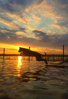 Sunset Takeoff!  #dogs #HappyAlert via @HappyHippoBilly