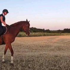Cute Horses, Pretty Horses, Horse Love, Woman Riding Horse, Horse Riding Tips, Show Jumping Horses, Show Horses, Bareback Riding, Funny Animals