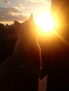 Nick assistindo o sol se despedir
