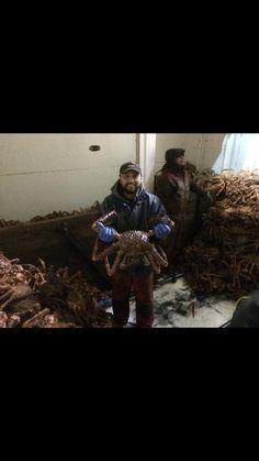 Brown King Crab Alaska Fishing, Bradley Mountain, King, Brown, Brown Colors, Chocolates