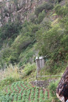 Levada do Bom Sucesso, Madeira