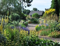 Discover The Beth Chatto Gardens – The Art of Planting at its Best