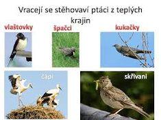 Výsledek obrázku pro stěhovaví ptáci Bird, Animals, Animales, Animaux, Birds, Animal, Animais