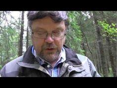 Haperot voivat olla aloittelevalle sienestäjälle haastava sienisuku, sillä haperoihin kuuluvia lajeja on paljon ja niitä on vaikeea tunnistaa toisistaan.  Viinihapero on yksi parhaista haperoista. Suomen Luonnon sieniasiantuntija Lasse Kosonen kertoo, että haperoissa kirpeät ovat hylättäviä sieniä, mutta miedot herkullisia ruokasieniä (video 1:44)..