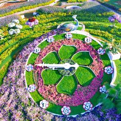 Garden design, pin project 4274418675 for the charming garden. Tulips Flowers, Large Flowers, Flower Wall, Flower Pots, Floral Clock, Dubai, Miracle Garden, Flower Pot People, Butterfly Species