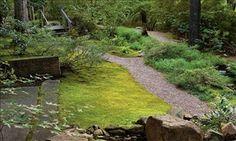 Plant a moss lawn