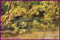 https://flic.kr/p/LJJpBH | Broceliande - J1 val sans retour petit lac avant le…