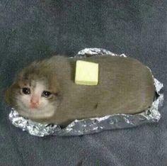 sad cat baked potato in foil Sad Cat Meme, Cat Memes, Dankest Memes, Jokes, Cute Funny Animals, Funny Cute, Cute Cats, Hilarious, Potato Cat