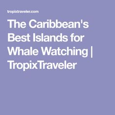8362a2dec The Caribbean s Best Islands for Whale Watching