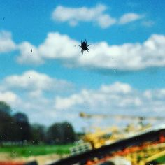 Thekla has returned  #spider #spinne #creepy #insects #animals #spiderweb #window #kitchenview #thekla #kreuzspinne