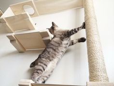 Cat Sky Track w/ Hammock shelves