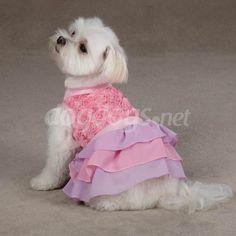 Vestido luxo para cerimônias especiais para cachorro de porte pequeno.