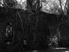 Ruínas de Paricatuba, Iranduba, AM - Brasil
