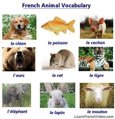 Learn How To Say 40 Kinds of Animals In French - Includes 40 MP3 Files! This is a fun lesson and a great way to practice your pronunciation!