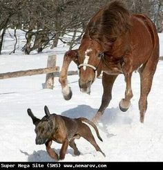 my horse and dog use to take turns chasing each other...you cant stop laughing ..its so funny!!!