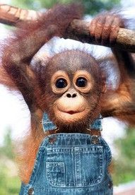 baby orangutang. I almost cried when I saw this! Hahaha SO CUTE