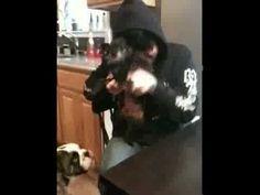 Frank Iero dances his dog to single ladies.