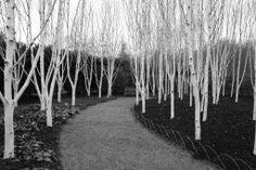 Cambridge winter gardens 15-02-10 189