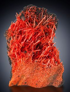 Crocoite Read Lead Mine, Tasmania, Australia Collector's Edge mined for several years at the famous Red Lead Mine. The incredible red-orange color, glassy luster, and large crystal size demonstrate why Red Lead crocoite specimens are so very popular with collectors worldwide. Collector's Edge Minerals specimen.