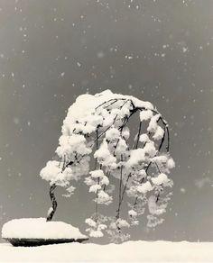 Bonsai by Masao Yamamoto Japanese Photography, Artistic Photography, Famous Photographers, Japan Art, Its A Wonderful Life, Yamamoto, Nature Photos, Photo Art, Cool Photos