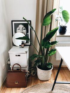 Plant Love: Meine 10 liebsten Pflanzen für die Wohnung