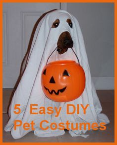 125 best pets in halloween costumes images on pinterest funny 5 easy diy pet costumes you could create in your sleep solutioingenieria Choice Image