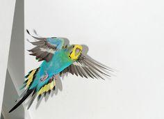 Bird exercise and bird grooming. http://www.animalmayhem.com/making-sure-your-pet-bird-gets-enough-exercise-and-pet-bird-grooming/