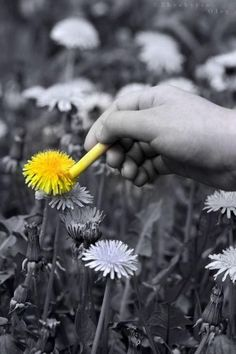 """I like how the person is """"coloring in"""" the splash of yellow. I think that adds to the fun and creativity of this photo. Splash Photography, Color Photography, Black And White Photography, Color Splash, Color Pop, Colour Yellow, Black And White Colour, Black And White Pictures, Yellow Black"""