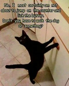 this is so like Fluffy would do!