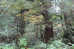 深き森の控えめな紅葉。