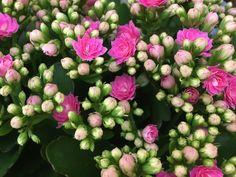 Floral Wreath, Wreaths, Garden, Flowers, Plants, Decor, Animals, Needlepoint, Floral Crown