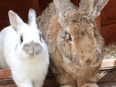 excellent article on bunny behaviors and training