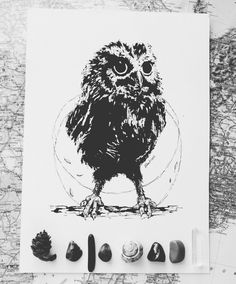 Owl by me.
