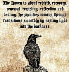 Animal Meanings, Animal Symbolism, Viking Quotes, Animal Spirit Guides, Raven Spirit Animal, Raven Art, The Raven, Norse Pagan, Warrior Quotes