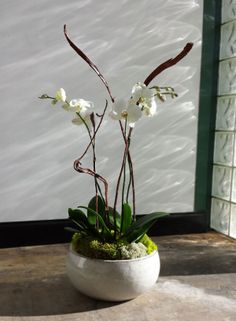Ikebana arrangement with Phalaenopsis orchids Copyright © 2014 Terry Furuta Designs. All rights reserved