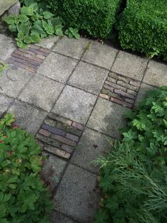 Some ugly concrete paving slabs are enlivened by the addition of these brick inserts.