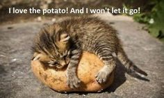 It's a little known fact that Cats that love potatoes.