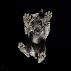 Le photographe est de retour avec un nouveau projet intitulé Under-dogs, mais cette fois-ci, il a choisi de photographier des chiens !