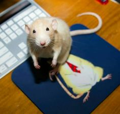 Mouse on a mouse pad?
