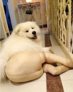 Dogs In Pantyhose - this is hilarious!!