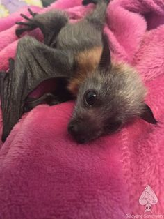 Cute little bat