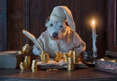 Every Year for Christmas, Photographer Peter Thorpe Dresses Up His Dog Photography Animals