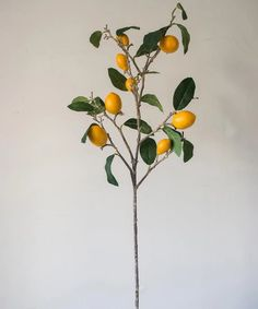 """PRODUCT Artificial Fruit - Handmade Artificial Fruit Stem FRUIT Lemon DIMENSIONS AND NUMBER OF FRUITS 39.4"""" Tall; 1.6"""" Max Fruit X 8lemonfruits per stem MATERIAL Silk Cloth, Glue, Plastic, Others COLOR Green, Yellow, Mixed Colors SHIPPING INFORMATION Product ships out within 48 business hours of receiving order; Ship Metal Hanging Planters, Yellow Plants, Fruit Wedding, Mango Tree, Wedding Arrangements, Artificial Plants, Tree Branches, Color Mixing, Greenery"""