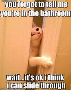 This looks my cat!! She always tries to come into the bathroom with me!