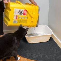 Best Litter Box For Cats