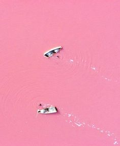 Pink Lake Hillier, Australia: The distinctive color is due not to pollution, but is due to a green alga  Dunaliella salina, halobacterium Halobacteria cutirubrum, and/or high concentration of brine prawn. Once the lake water reaches a salinity level greater than that of sea water, the temperature is high enough and adequate light conditions are provided; the alga begins to accumulate the red pigment beta carotene...http://en.wikipedia.org/wiki/Pink_Lake_(Western_Australia) #Pink_Lake #Australia