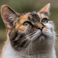 Amy de huiskat