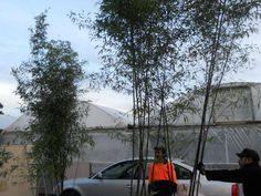Red Cloud, Black Bamboo, Green Leaves, Outdoor Gear, Tent, Clouds, Running, Water, Cabin Tent